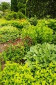 Zahrada, zahradní, různých rostlin