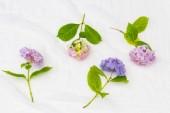 Gyönyörű, pasztell Hortenzia virágok fehér, finom háttér