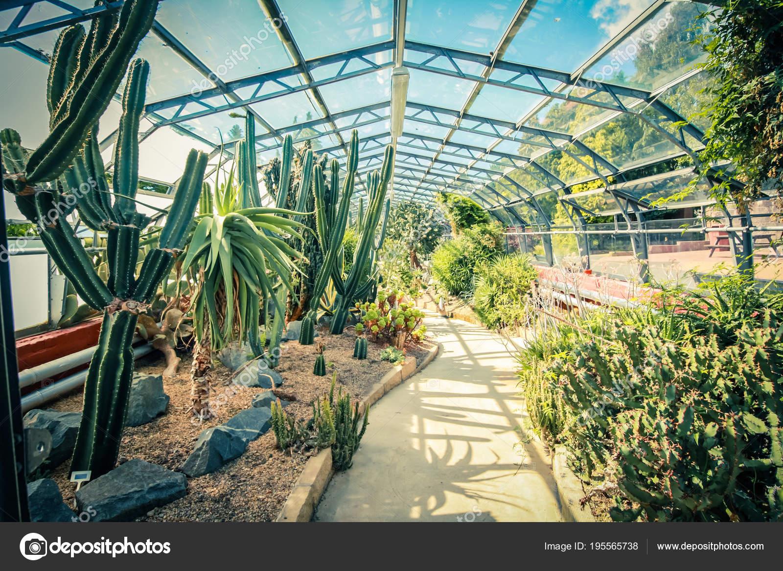 Exotischen Pflanzen Kakteen Und Sukkulenten Alten Glas Gewachshaus