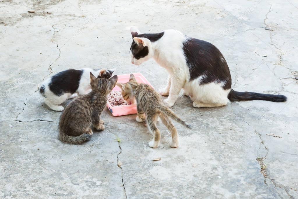 Kočička jíst obrázky