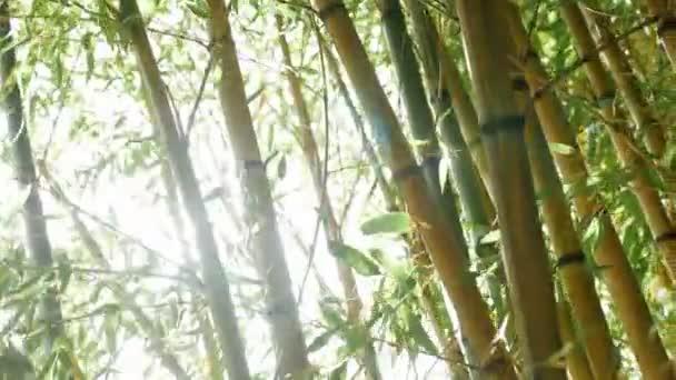 Dickicht der grünen Bambus gegen