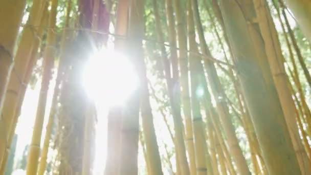 houštiny zelený bambus proti
