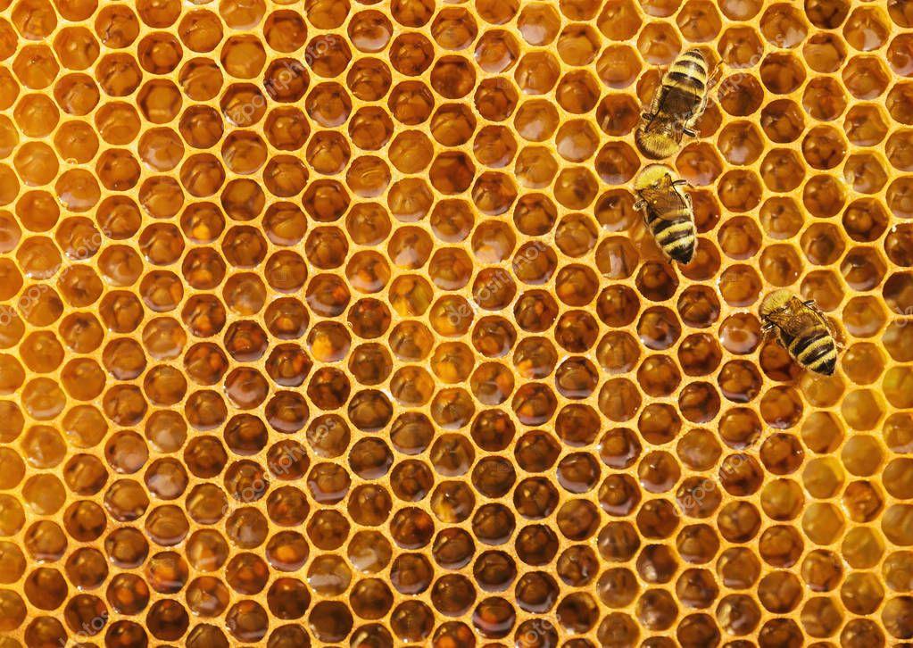 Api sullo sfondo nido ape texture con spazio della copia foto stock rangizzz 188599988 - Nido api finestra ...