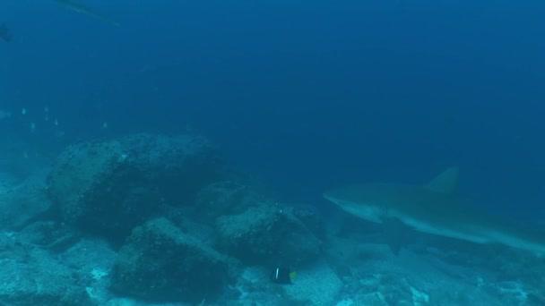 Cápa búvárkodás, víz alatti videóinak Galapagos-szigeteki Csendes-óceán