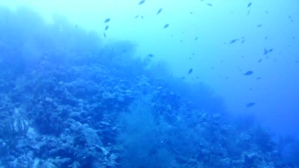 Korallenleben Karibik Meer Bonaire Insel Unterwassertauchen Taucher Video