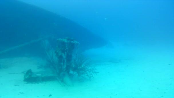 coral life caribbean sea Bonaire island underwater diving divers video