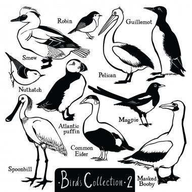 Birds collection Birds silhouettes Vector isolated objects Part