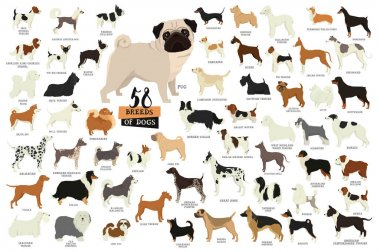 58 Breeds of dogs Isolated objects
