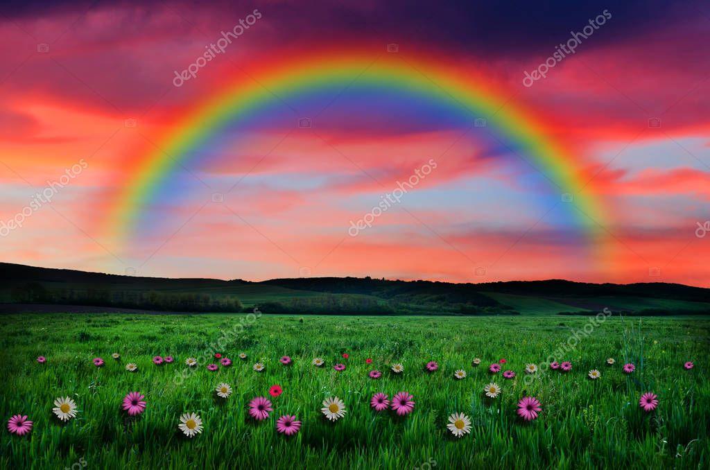 Campo Di Fiori Su Sfondo Arcobaleno Foto Stock Klagyivik 129853238
