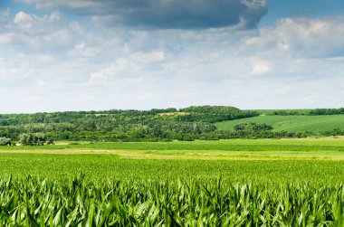 fresh green field