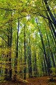 Fotografie Krásný les na slunečný den