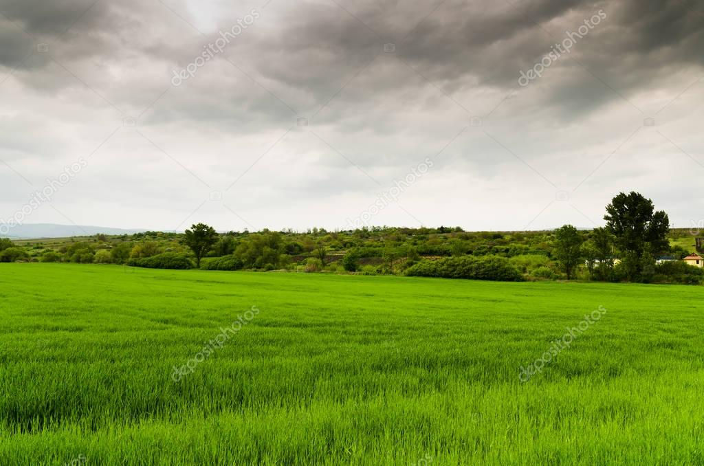 green field near forest