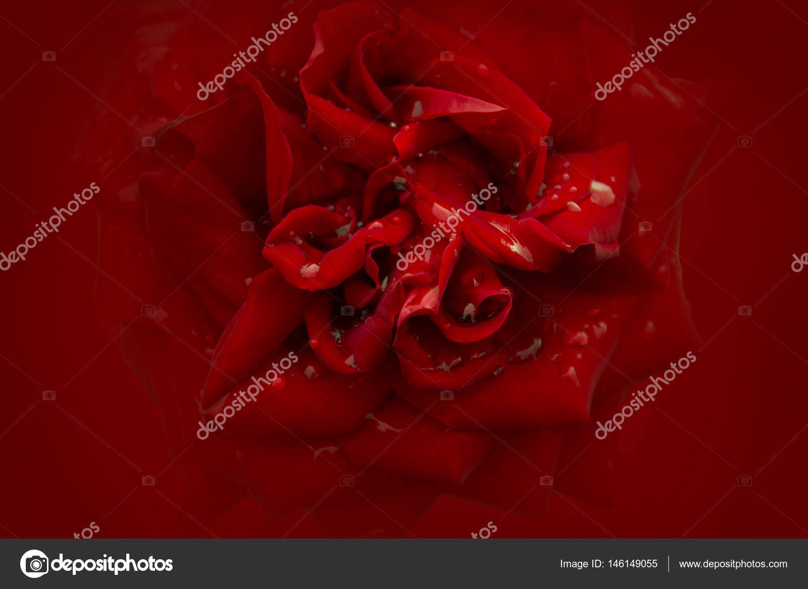 Sfondo Rosa Morbido Di Colore Rosso Vivo Foto Stock Rayisa