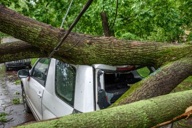 Gigantic fallen tree toppled and crushed parked car as a result of the severe hurricane winds in one of courtyards of Moscow