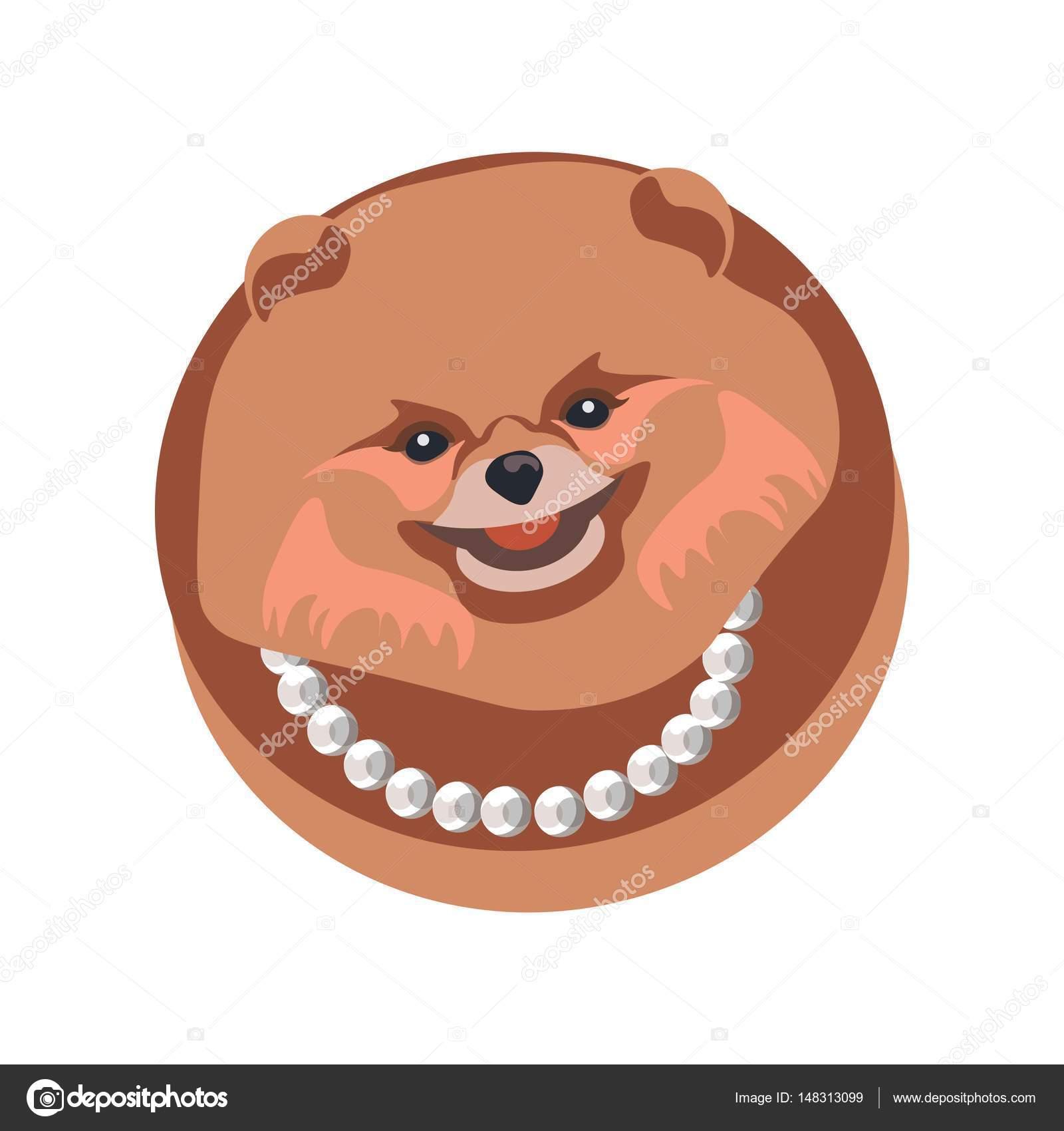 Длинноволосого собака Померанский шпиц в ожерелье ...