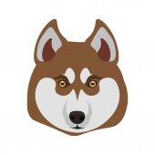 Psa plemene sibiřský Husky