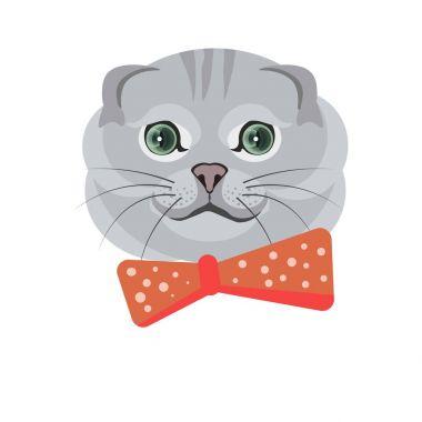 Scottish fold cat in bow tie