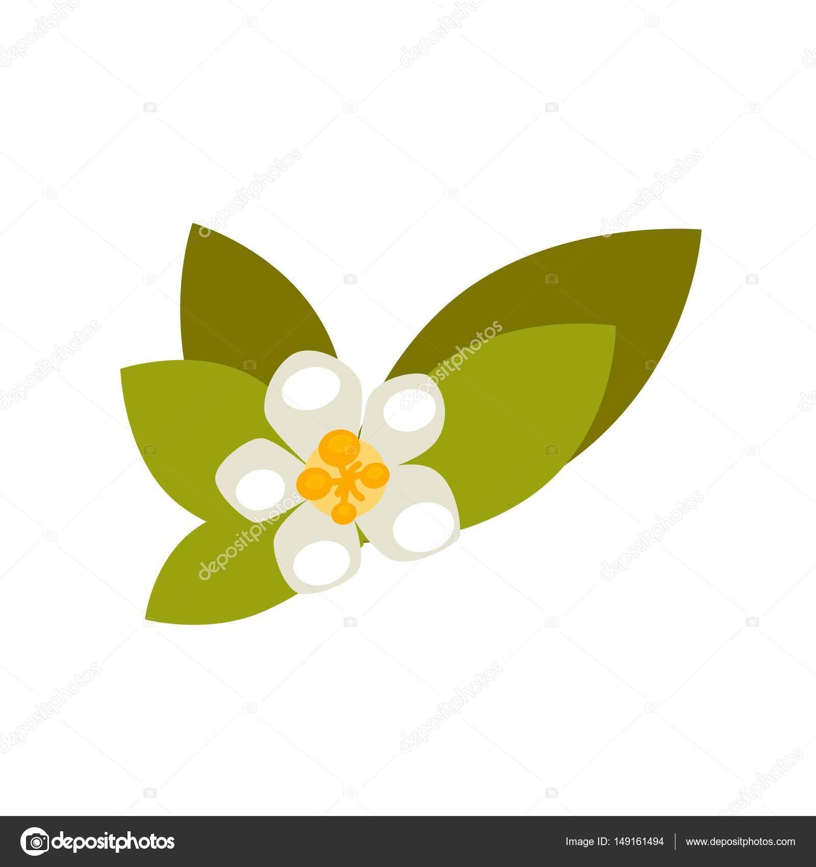 Vanilla Flower With Green Leaves Stock Vector Sonulkaster 149161494