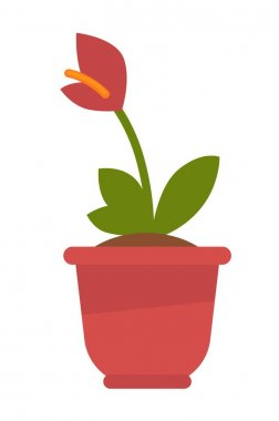 Calla plant in flowerpot isolated on white vector picture