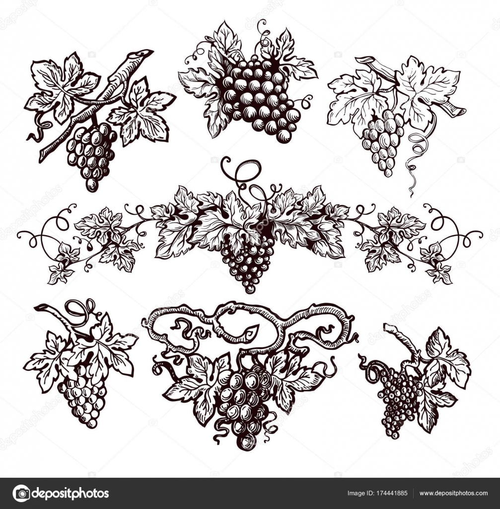 Grape Vine Sketch Icons Vector Isolated Symbols Vineyard Vintage ...