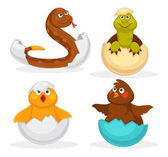 Fotografie Baby animals hatch eggs or cartoon pets hatching. Vector flat isolated funny toy icons rattle snake, crocodile and dinosaur baby, chick or duck bird. Kid animal characters set