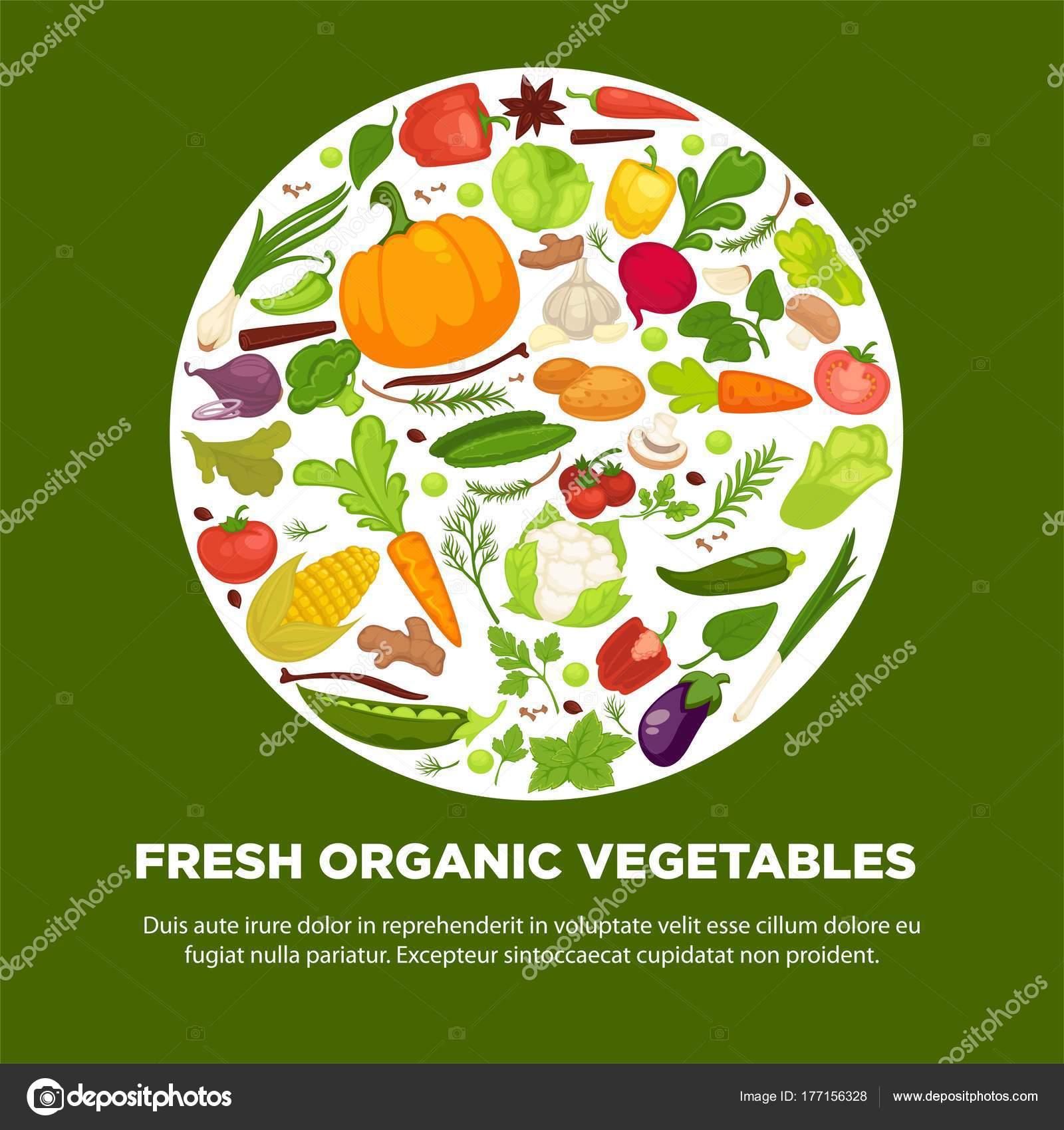 Plakat Zdrowe Jedzenie Warzyw Organicznych Warzywko Zdrowych Kapustę