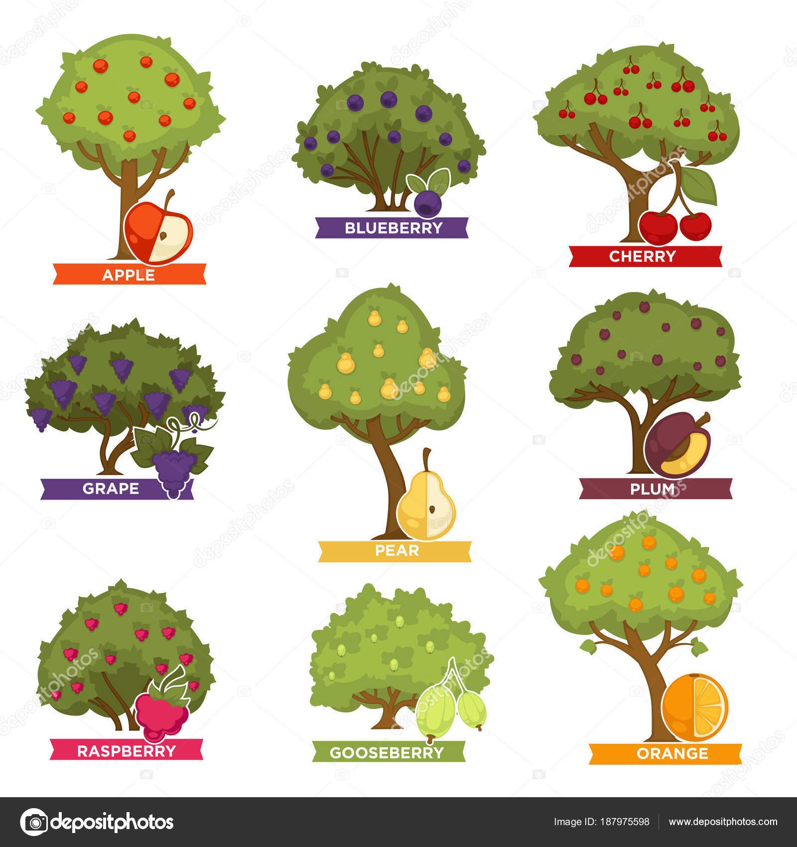 Fotos arbol tropical nombres rboles huerta con frutos for Arboles de hoja perenne con sus nombres