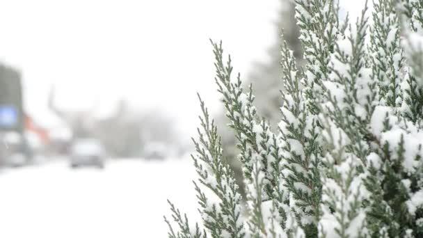 Kiefer am Straßenrand mit Schnee bedeckt mit vorbeifahrenden Autos im Winter