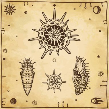 Set of graphic images: doll of an insect, larva, radiolaria. Vector illustration. A background - imitation of old paper.
