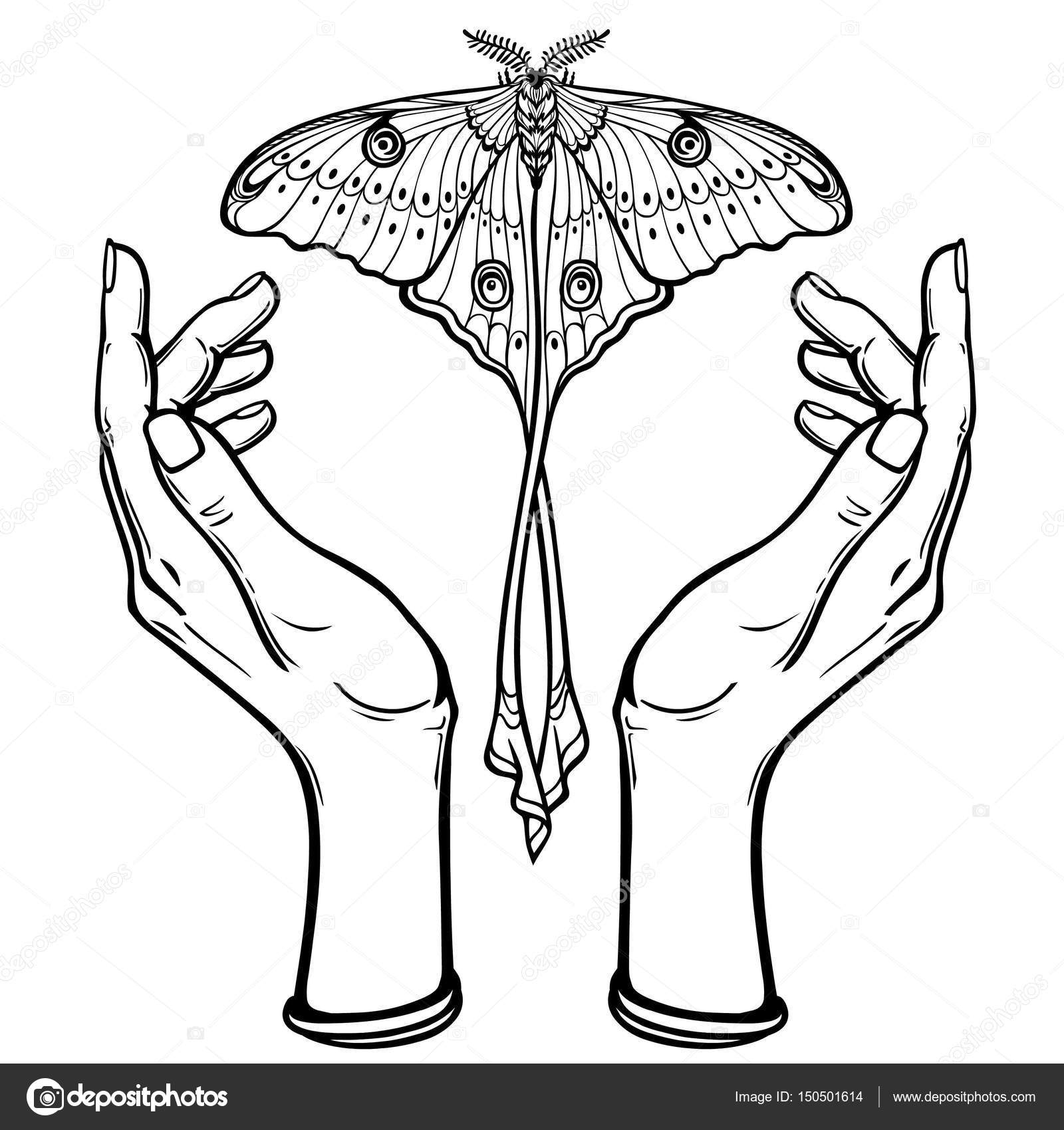 Insan Elinin Bir Kuyruğu Olan Bir Kelebek Tutun Boyama Kitabı