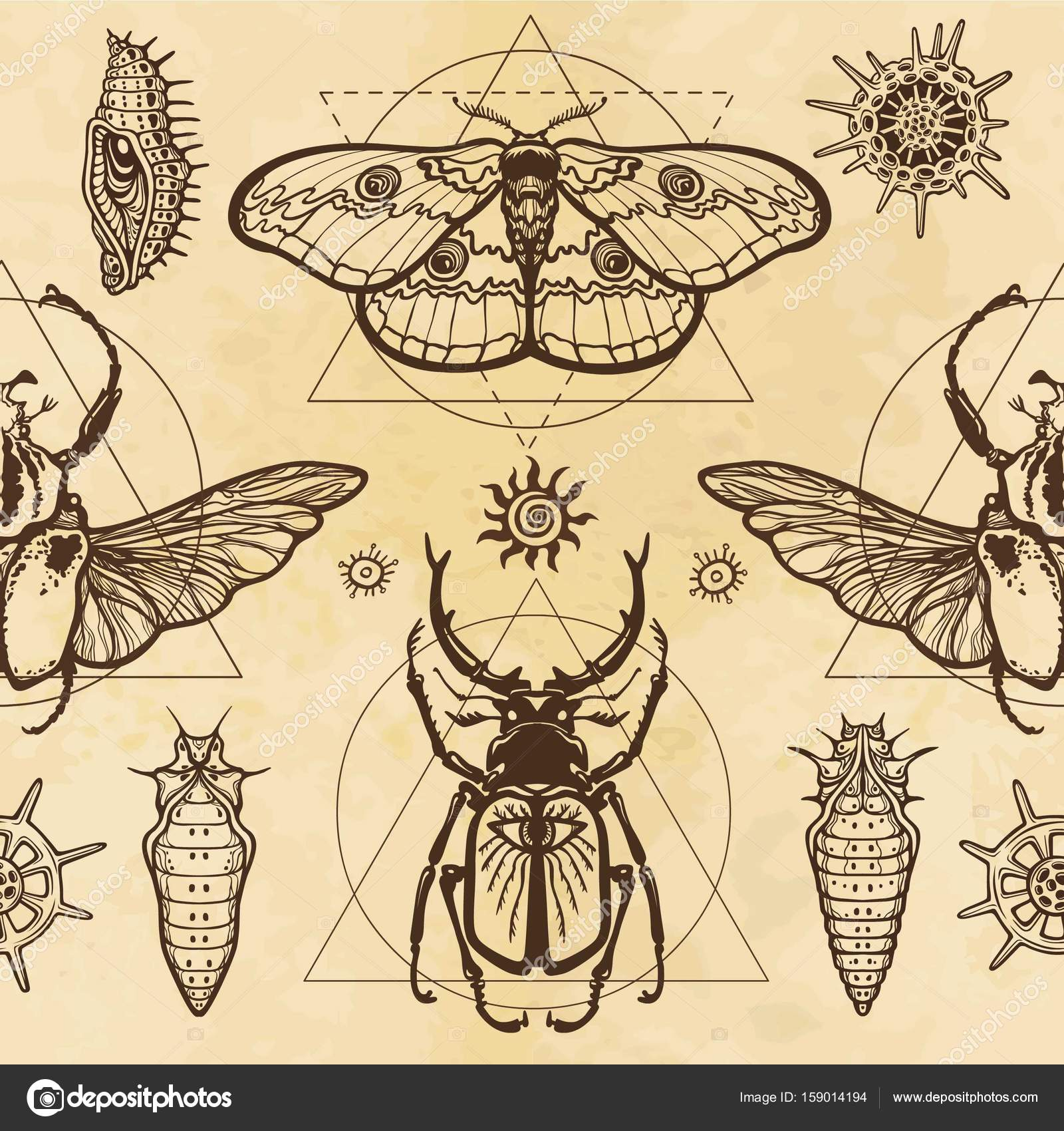 Seamless Color Pattern Image Of A Butterfly Larva Bug Goliath Horned Sacred Geometry Background