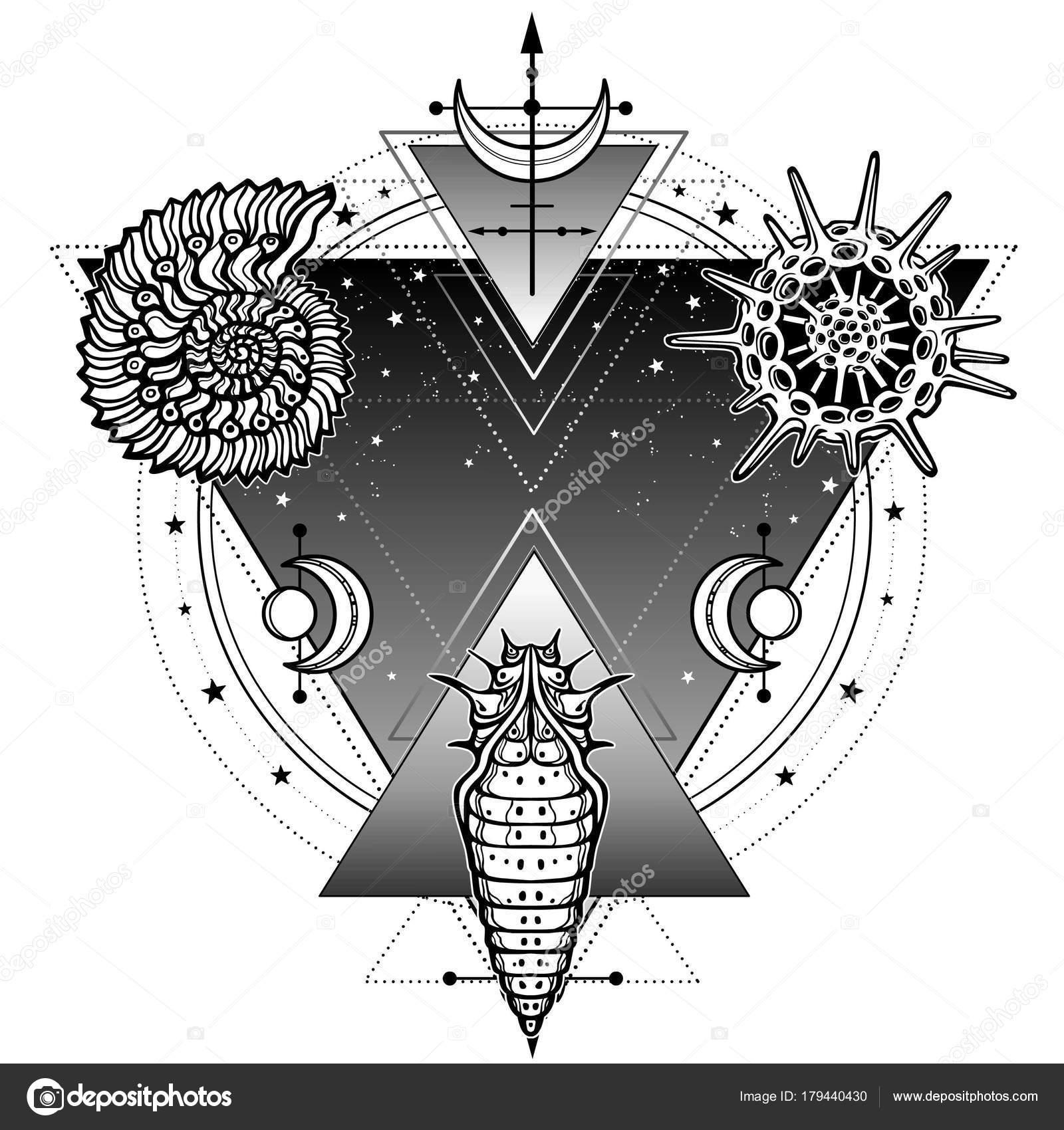 Mystical Symbols Origin Life Shell Radiolaria Larva Sacred Geometry