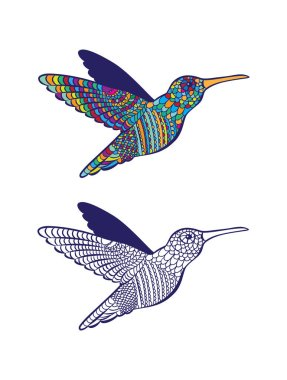 Drawn bird colibri