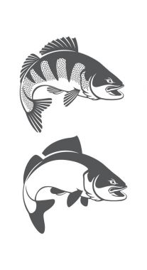 zander fish icon set