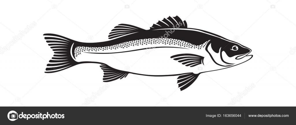 Lubina de pescado imagen — Archivo Imágenes Vectoriales © kvasay ...