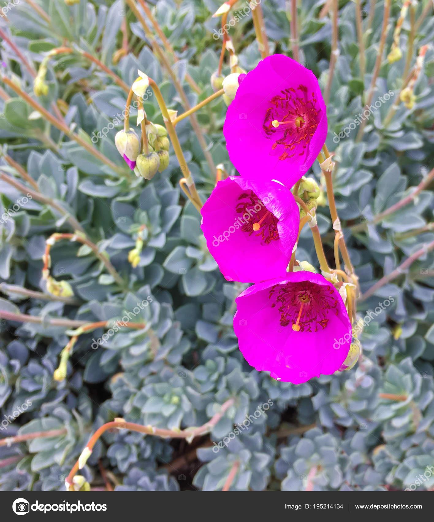 A Beautiful Cactus Flower Stock Photo Rinderart 195214134