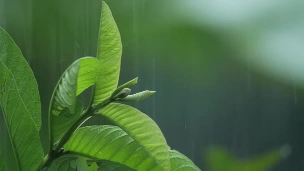 Leaves in the rain in slow motion