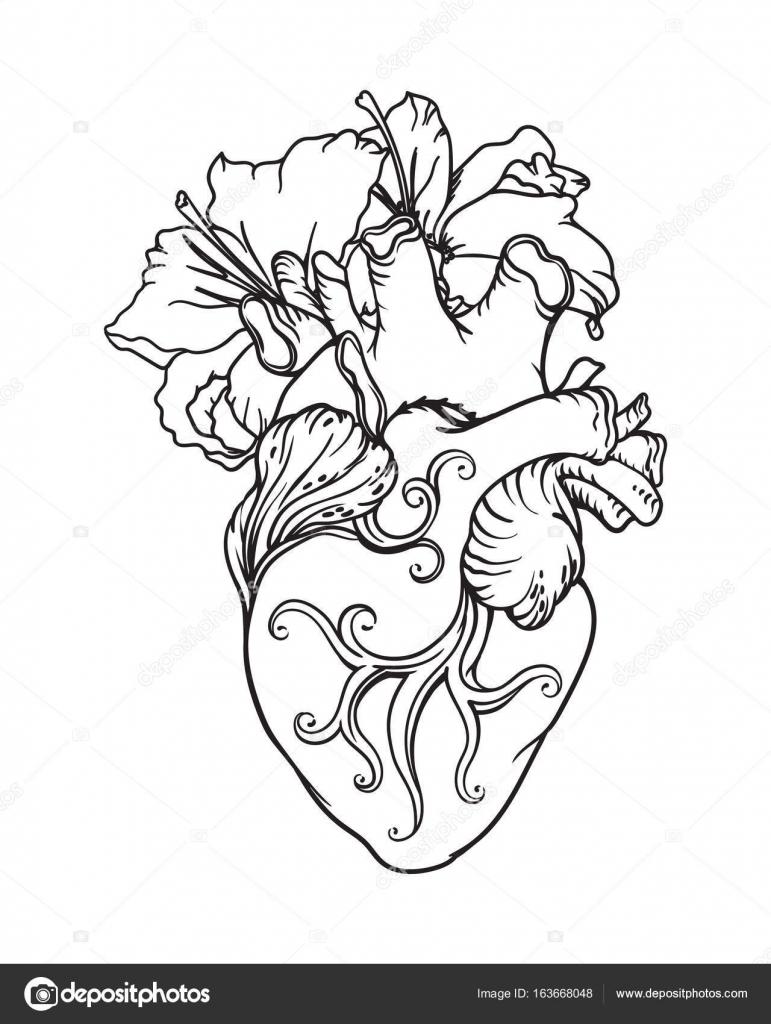 Estilizado Dibujo Anatómico Del Corazón Humano Corazón Con Lirios