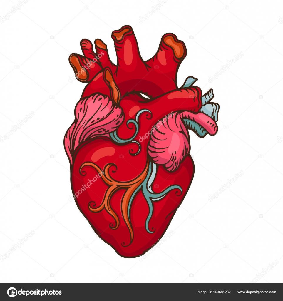 Desenho De Coração Humano Estilizado