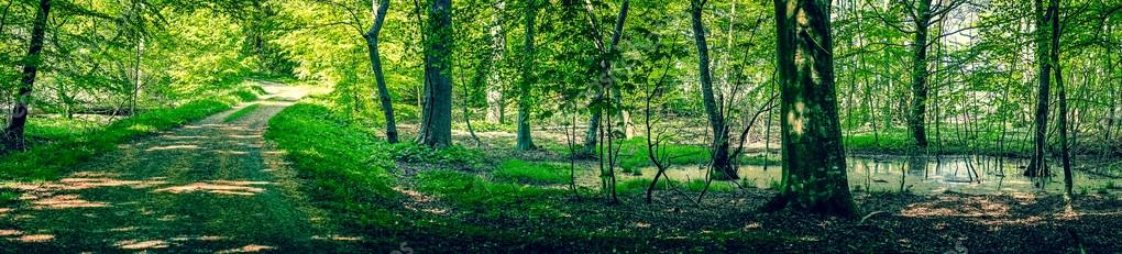 Фотообои Swamp area in a green forest
