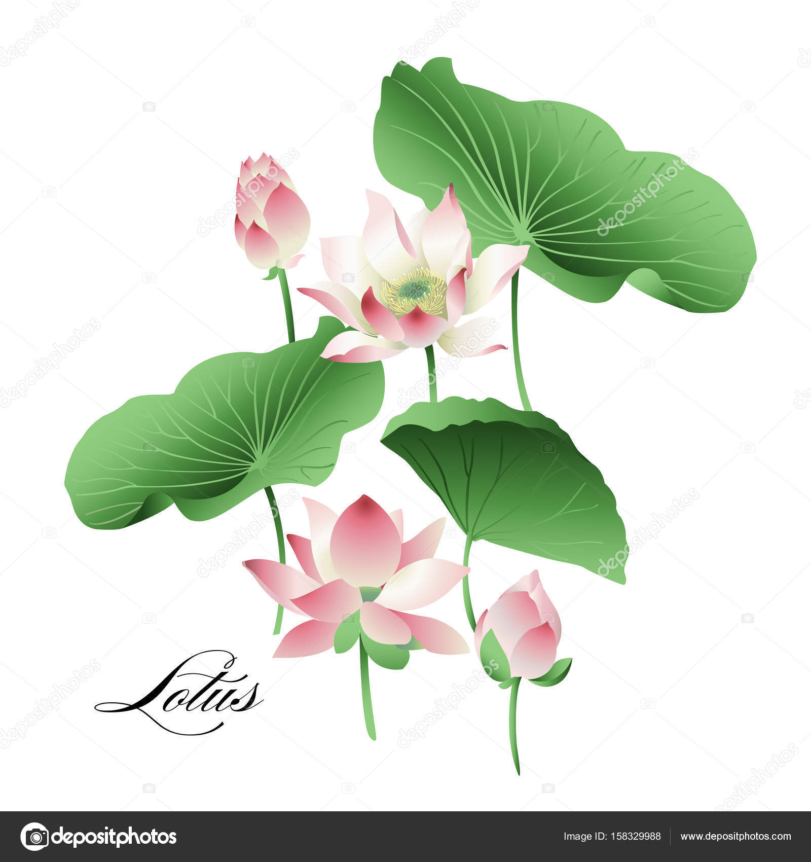 Vector Set Of Hand Drawn Lotus Flowers And Leaves Watercolor