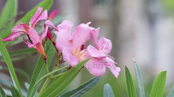 růžové květy na zahradě