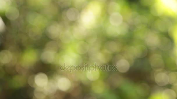 Defocus nature green bokeh