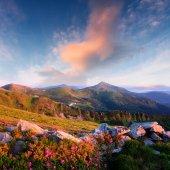 Fotografie Kouzelný Růžový rododendron