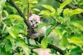 Fotografie Malé kotě s modrým brunetka na stromě
