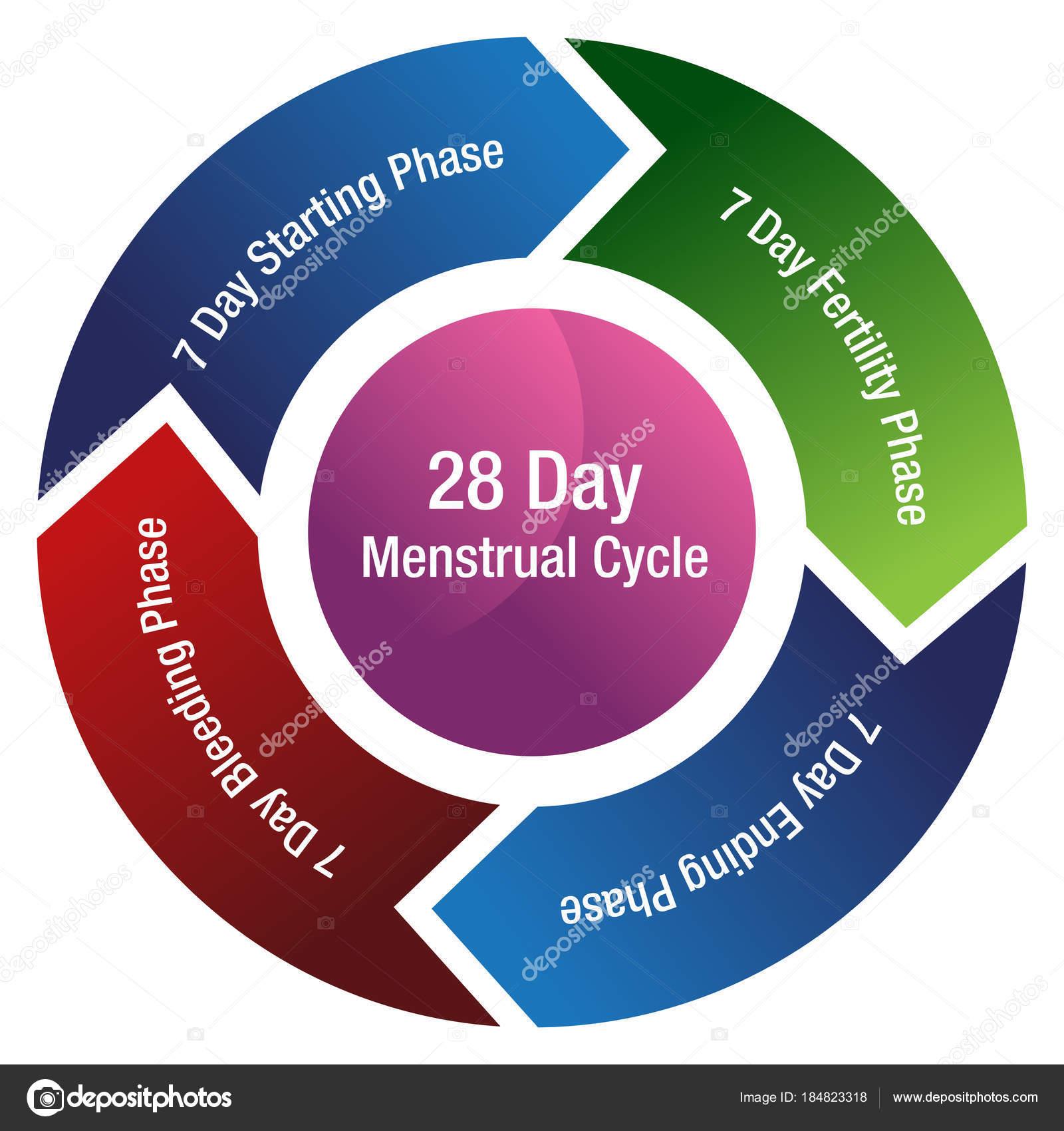 tabla de menstruacion de la mujer