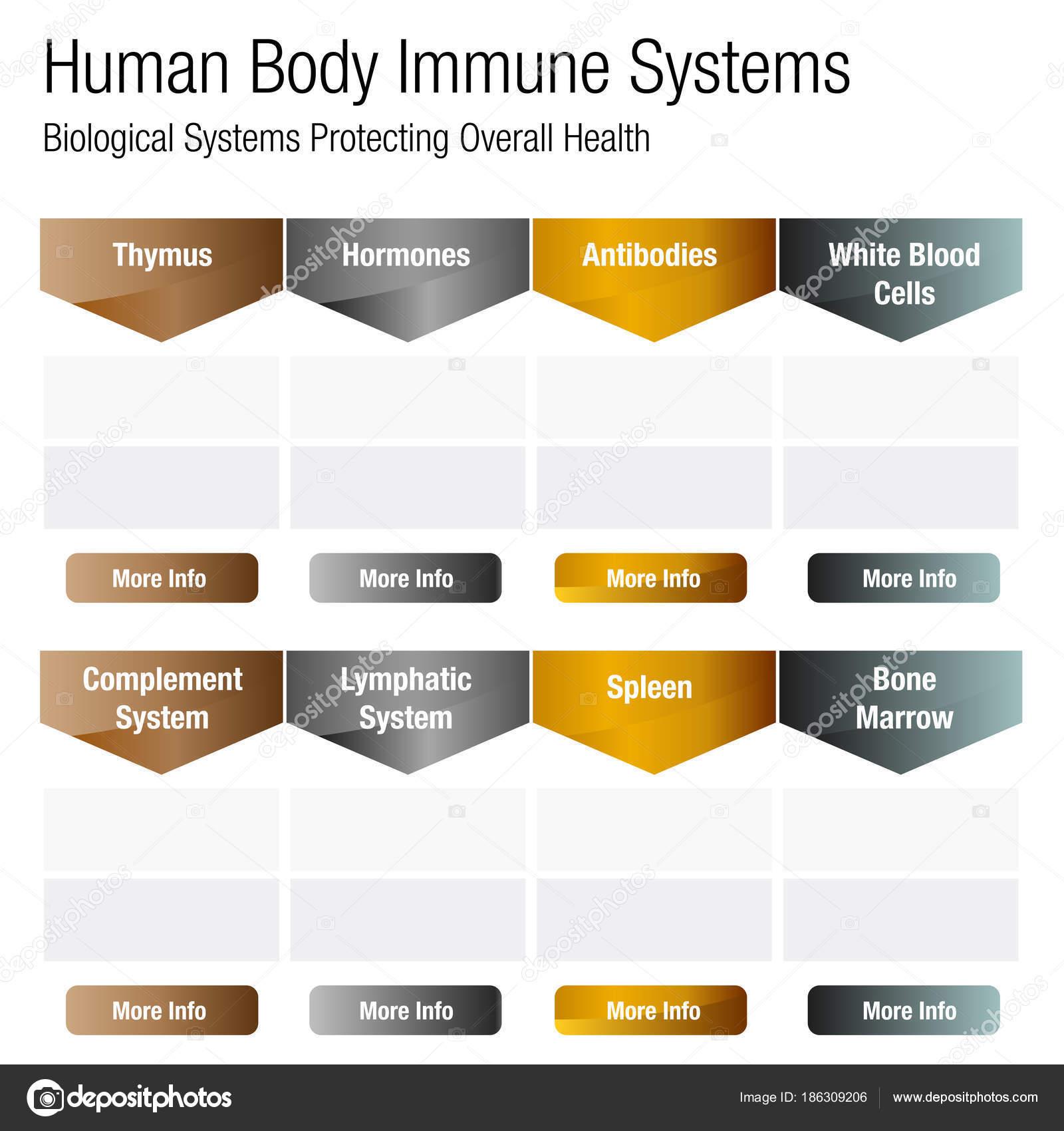 tabla de cuerpo humano sistema inmune — Vector de stock ...