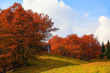 In the beautiful forest of the trees with the orange coloured leaves there is an old small house on the background of interesting sky. Autumn village scene. stock vector