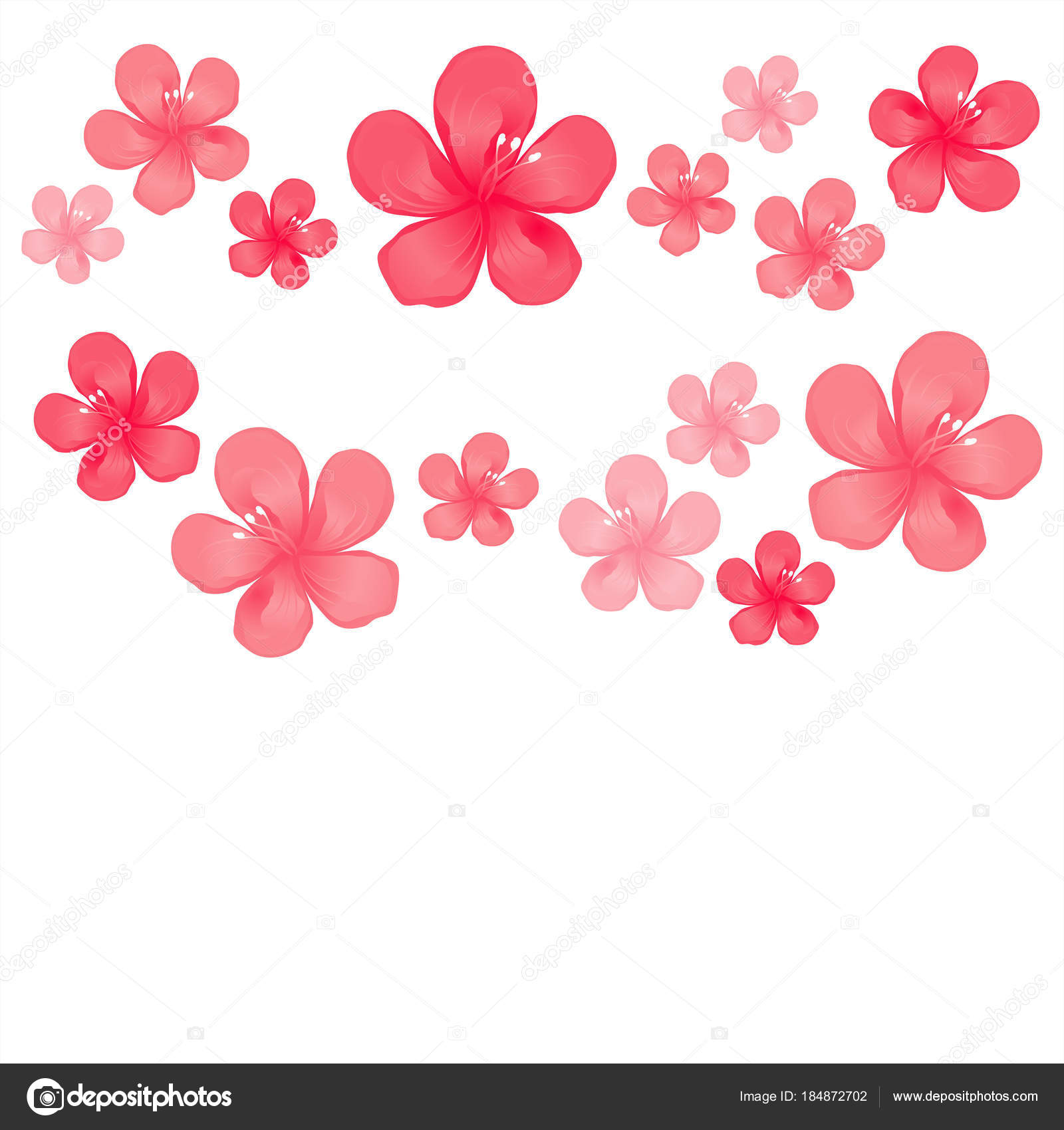 Flores Color Rosado Rojo Aisladas Sobre Fondo Blanco Flores Del
