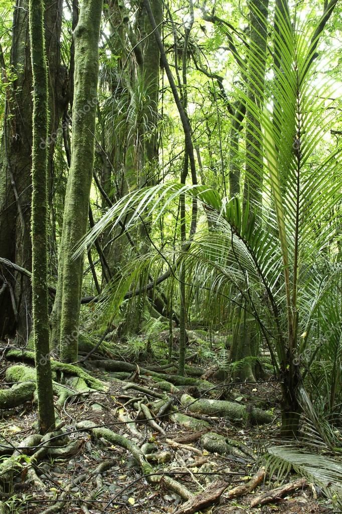 Lush tropical jungle